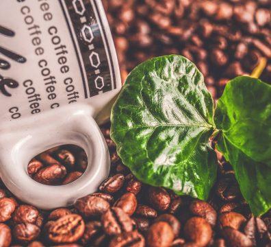 Diferenças entre os cafés arábica e conilon