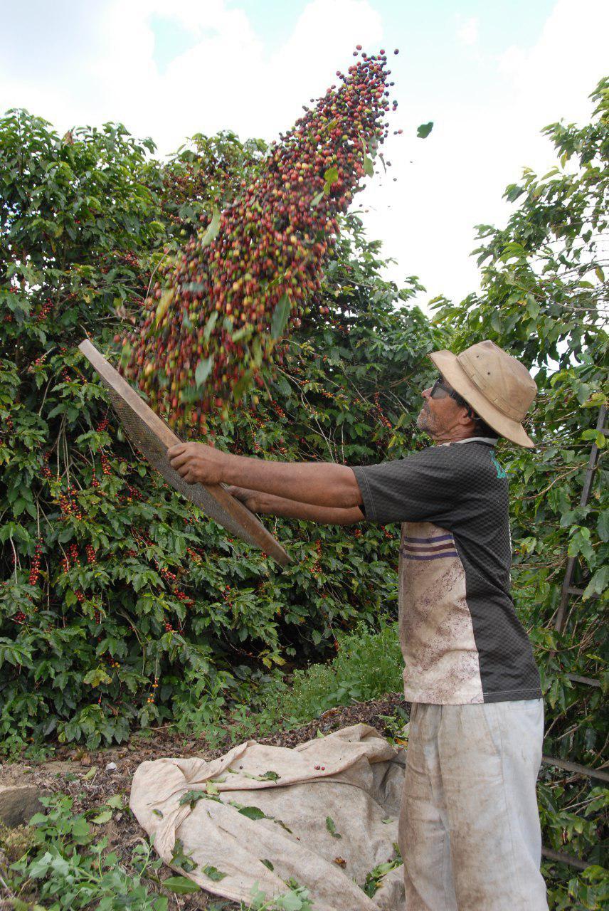 Produtores de cafe Exportadora Guaxupe